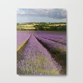 Evening Lavender Metal Print