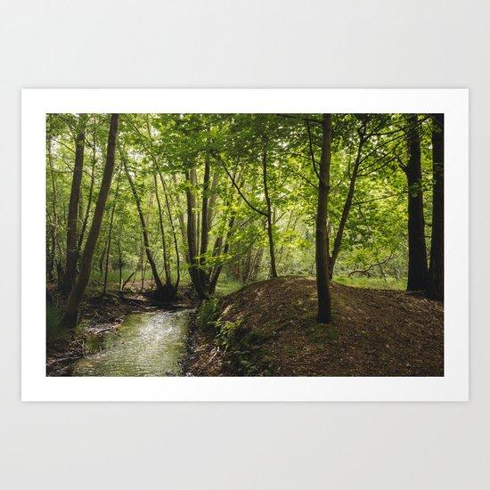 Small woodland stream. Art Print