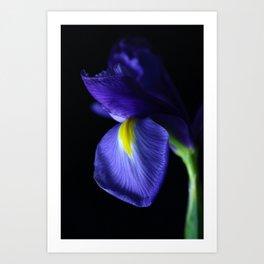 Moody Iris Art Print