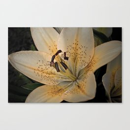 Morning Passion Canvas Print