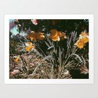 September Bloom Art Print