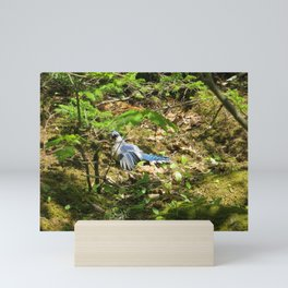 BLUEJAY SUNBATHING, SURROUNDED BY GREENERY Mini Art Print