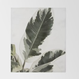 Variegated Rubber Plant 03 Throw Blanket