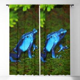 Blue Poison Dart Frog Blackout Curtain