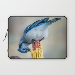 Blue Jay on corn cob Laptop Sleeve