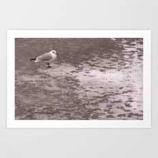Lonely gull on the ice Art Print