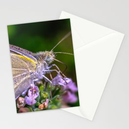Cabbage White Butterfly, Macro Photograph Stationery Cards