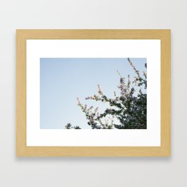 Blooming pink Framed Art Print