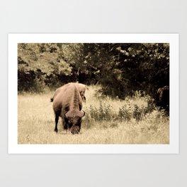 Bison Roaming the Great Plains Art Print