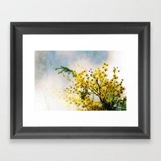 Mimosa Framed Art Print