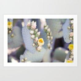 Yellow Desert Blooms Art Print