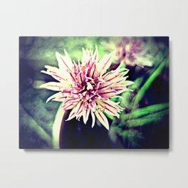 Allium schoenoprasum Metal Print