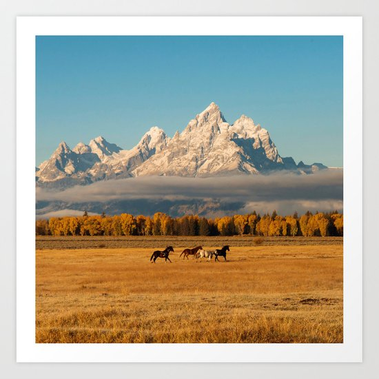 Horses Running in Grand Teton by thedancingwind