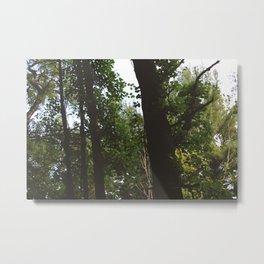 Forest Trail XXX Metal Print