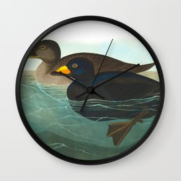 Scoter Duck Vintage Scientific Bird & Botanical Illustration Wall Clock