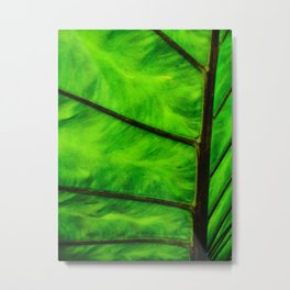 Leaf veins Metal Print