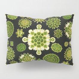 Ernst Haeckel - Melethallia Pillow Sham