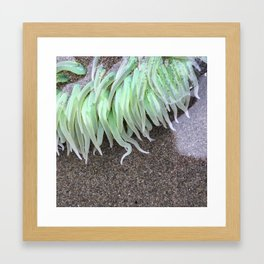 Green Anemone Framed Art Print