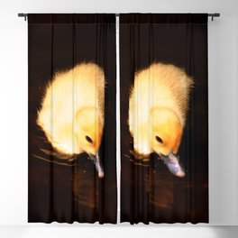 Baby Duckling Swimming Blackout Curtain
