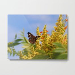 Butterfly Song Metal Print