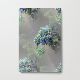 Juniper berries (seed cones) Metal Print