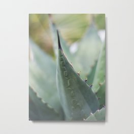 Agave Patterns Metal Print