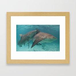 Beautiful Bulls Framed Art Print