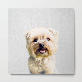 Dog - Colorful Metal Print