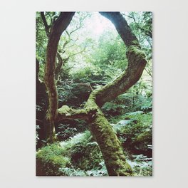 Unearthed Canvas Print