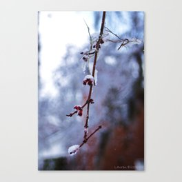 Snow in the South? Canvas Print