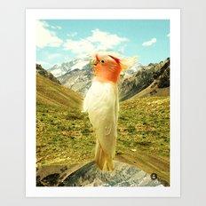Parrot Mountain Art Print