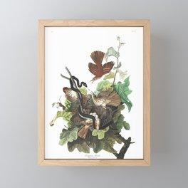 Ferruginous Thrush by John Audubon Framed Mini Art Print