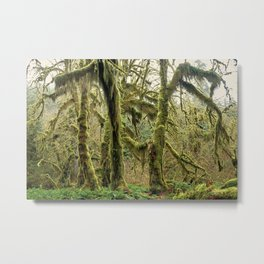 Hall Of Mosses Metal Print