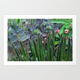 Arid Color Art Print