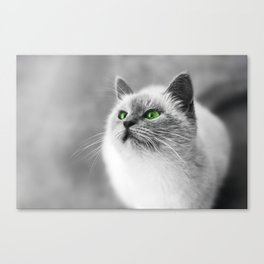 Black and white cat with green eyes Canvas Print