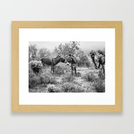 Donkey Courtship Framed Art Print