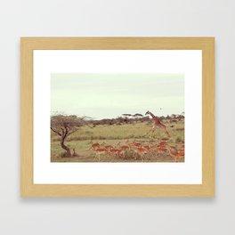 Jackal moves in Framed Art Print