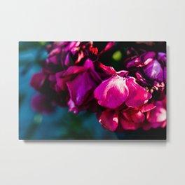Pink Oleander Metal Print