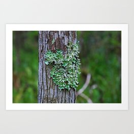 Likin' the Lichen Art Print