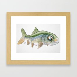 Baby Lake Trout Framed Art Print