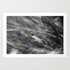 Fly Away Home Art Print