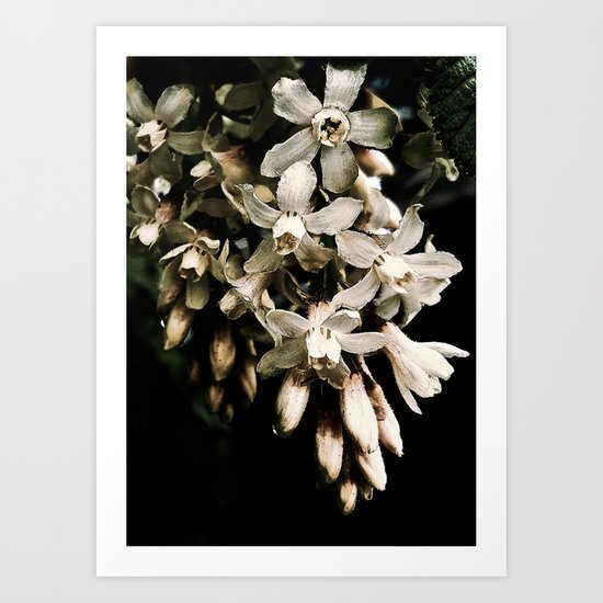 Flowering Currant, White icicle Art Print