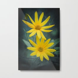 Two yellow flowers of Jerusalem artichoke Metal Print