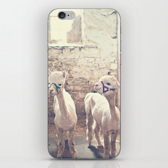 Young Alpacas  iPhone Skin