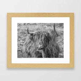 Black and white big Scottish Highland cow Framed Art Print