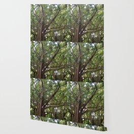 Banyan Beauty Wallpaper