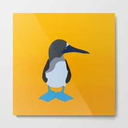 Sula nebouxii - be blue-footed Metal Print