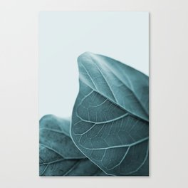 Teal Plant Leaves Canvas Print