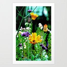 Sacramento - San Joaquin River Delta Spring Flowers Art Print
