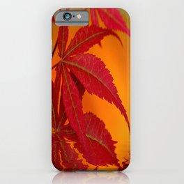 Ahorn am Wasser iPhone Case